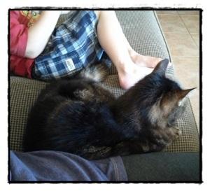 Cat Lap