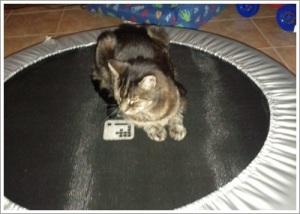 Cat on Tramp