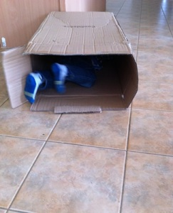 Playing With Box